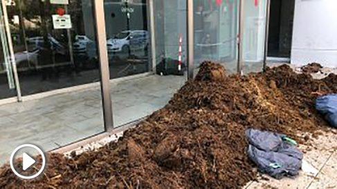 El acceso a los juzgados de Figueras lleno de kilos de excrementos