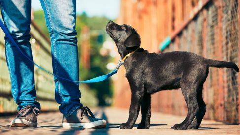 Cómo adiestrar a un cachorro desde el primer día