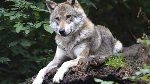 Los grupos y clasificación de los animales son necesarios para su estudio.