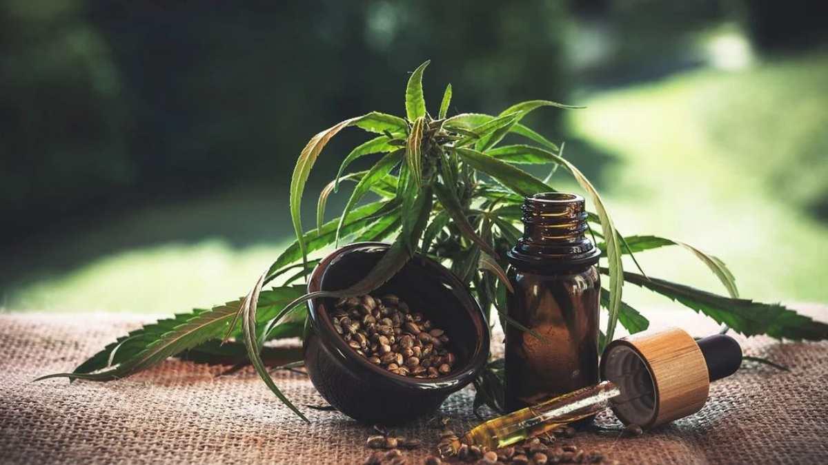 Semillas de cáñamo: Propiedades y beneficios para la salud