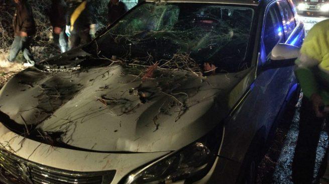 Coche afectado por la caída de un árbol en Jete (Granada). Foto: Europa Press