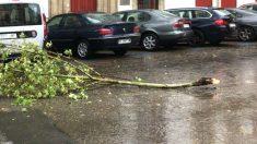 Árbol caído a causa del viento (Foto: EUROPA PRESS)