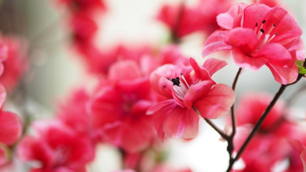 Las flores artificiales pueden durar mucho si las cuidas bien