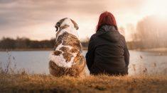 Aprende cómo detecta un perro un problema de salud en humanos