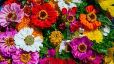 Aunque cortes las flores hay formas de hacer que se conserven bien