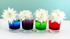 Pintar flores es muy sencillo con el método de absorción