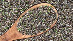Las semillas de cáñamo aportan energía