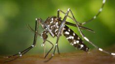 Cada año se producen en el mundo entre 50 y 100 millones de casos de dengue.