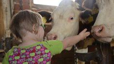 Existen muchos casos de animales que cuentan con anomalías genéticas, pero, ¿y de animales que padezcan síndrome de Down?
