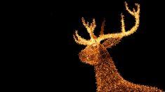 Disfrutar de la iluminación y el alumbrado navideño de tu ciudad