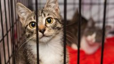 Guía de pasos para saber cómo elegir una guardería para tu gato