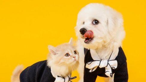 Los perros y gatos son comidos por una minoría de chinos