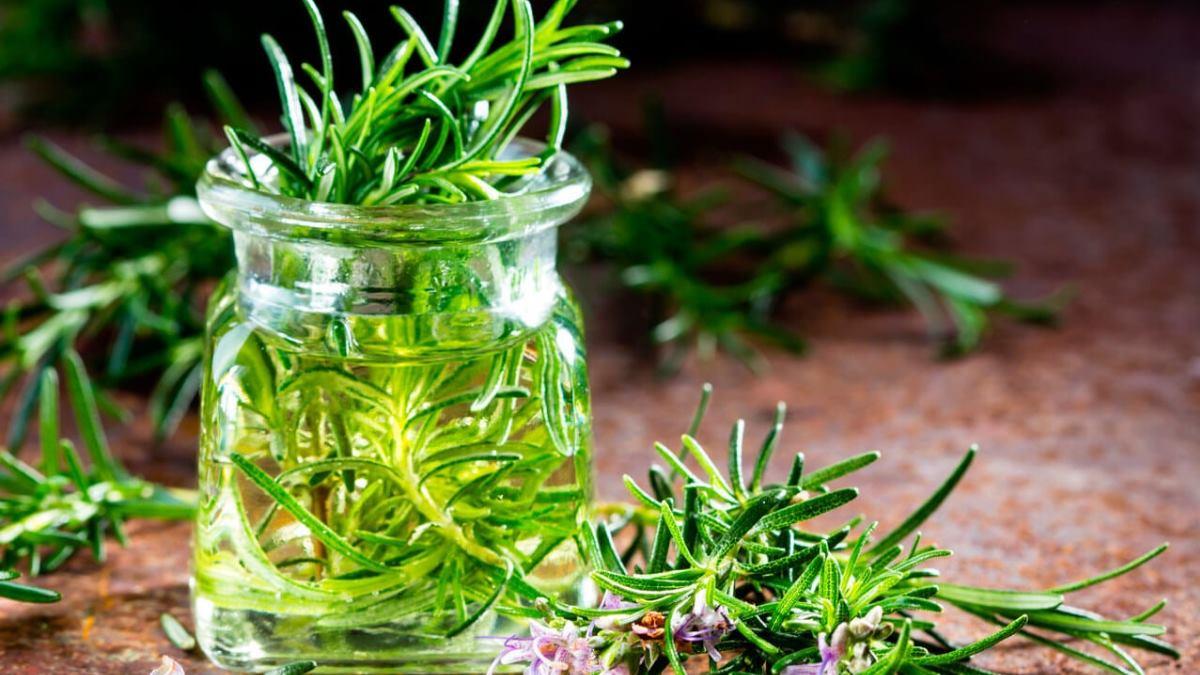 El romero es una planta que tiene muchos beneficios para el cabello