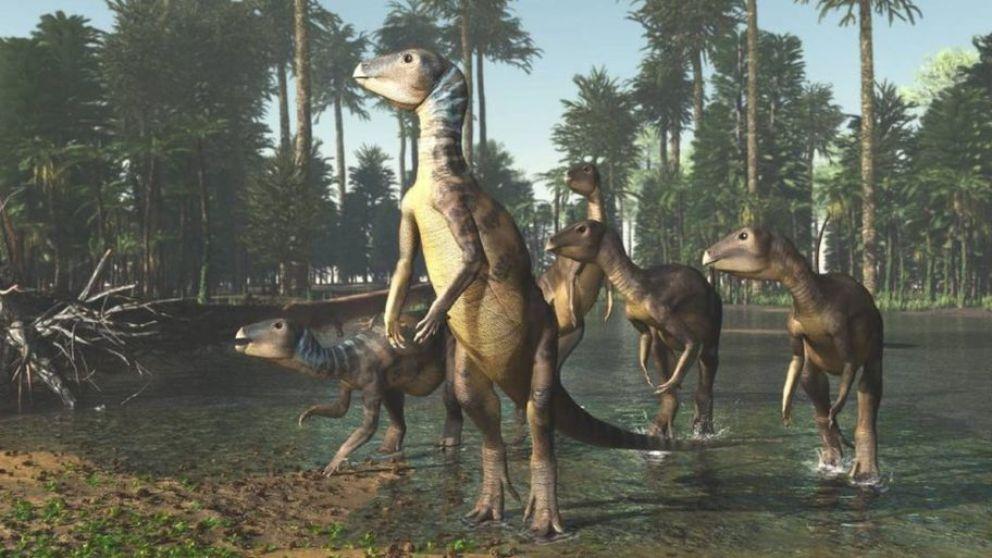 Conoce al Weewarrasaurio, una nueva especie de dinosaurio