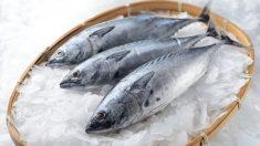 Aprende a identificar un buen pescado fresco