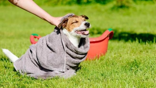 bañar a un perro en seco