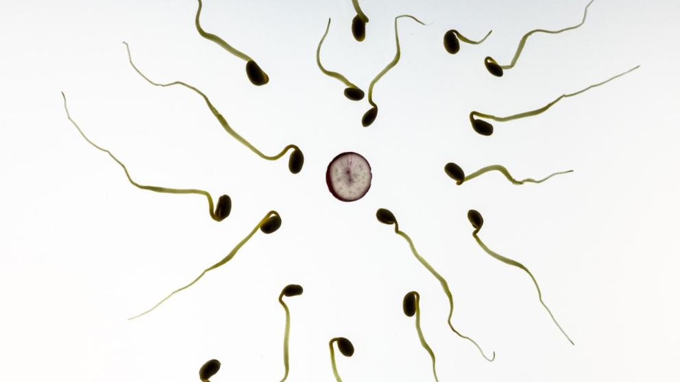 Conoce el estudio de Harvard que estudia el número ideal de eyaculaciones para prevenir el cáncer de próstata