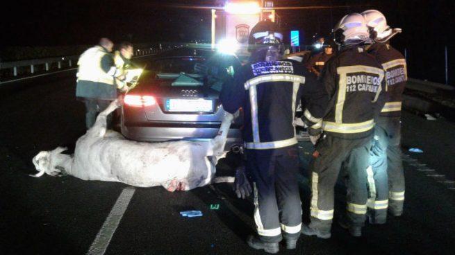 Un muerto y tres heridos al impactar un vehículo con una vaca en la A-8 en Cantabria