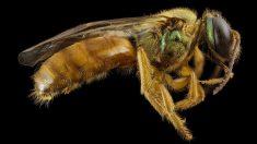 La entomofagia o consumo de insectos es cada vez más usual