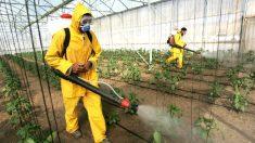 Agricultores fumigan las plantaciones con pesticidas. (Foto: GETTY)