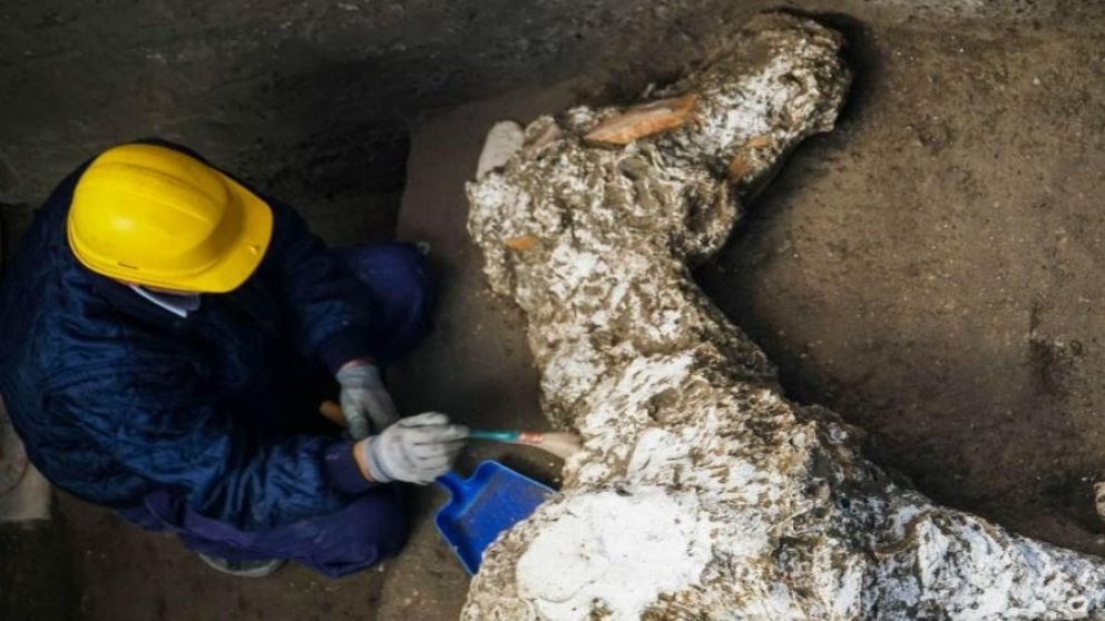 Hallado un caballo petrificado en perfecto estado en la antigua Pompeya