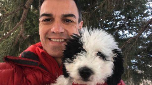 Pedro Sánchez con su perra Turca, en una imagen que difundió en diciembre de 2017 en Instagram.