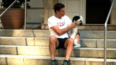 Pedro Sánchez posa con la perrita Turca en las escaleras de La Moncloa.