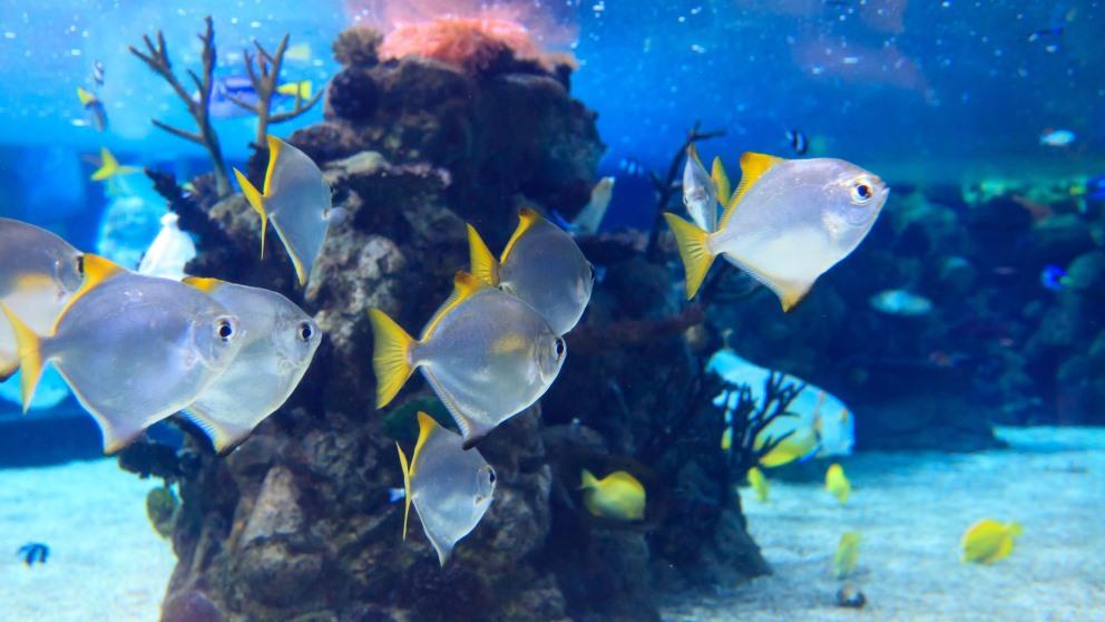 Limpiar un acuario de forma correcta es imprescindible para una vida saludable de los peces