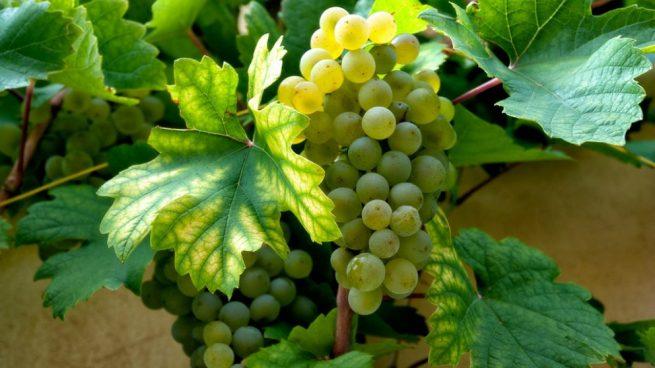 atragantado por una uva