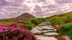 Decorar el jardín con piedras le dará un ambiente espectacular