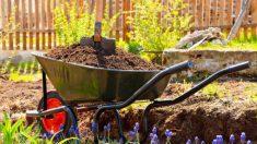 Todos los pasos para cuidar un jardín descuidado