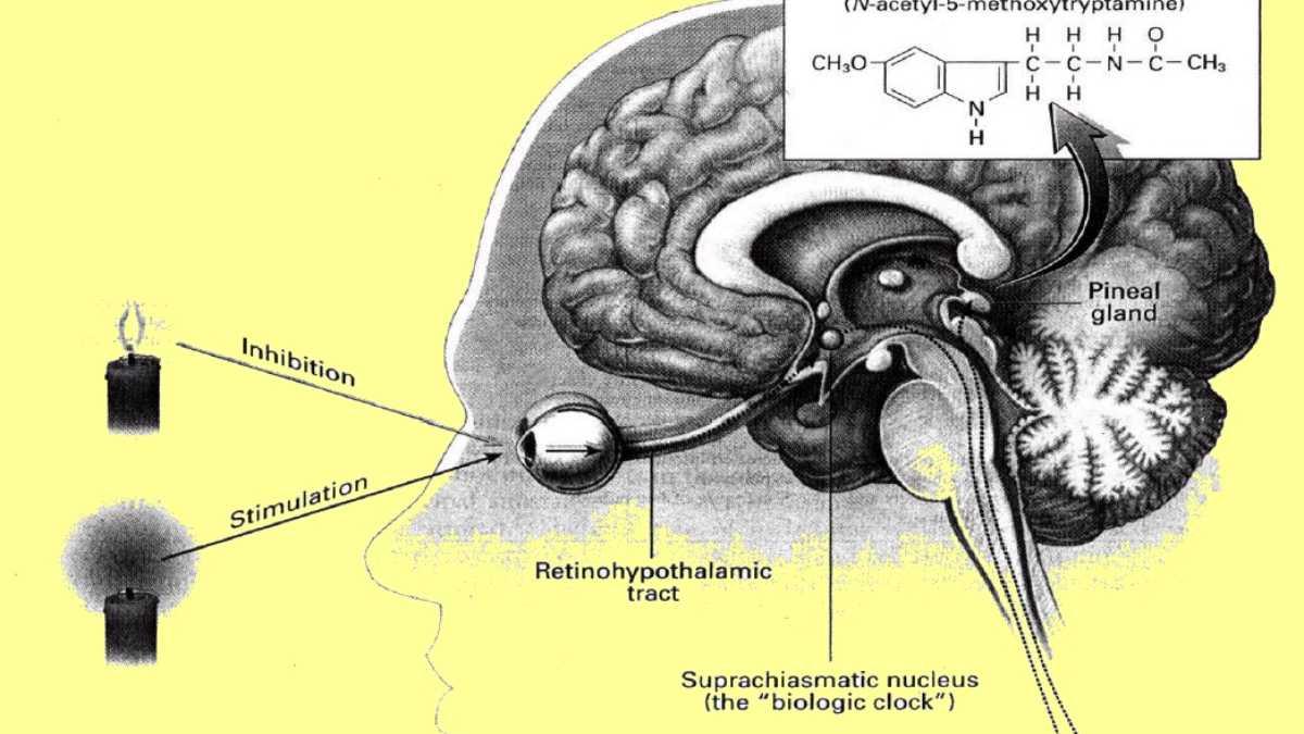 Efectos de la melatonina