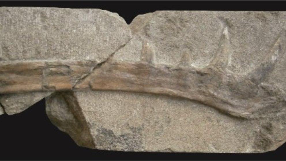 Conoce al Klobiodon Rochei, el nuevo reptil volador descubierto de tiempos prehistóricos