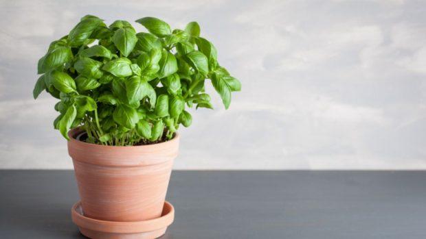 Cómo hacer un huerto casero de plantas aromáticas y medicinales
