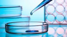 Es una alternativa para ayudar al sistema inmunológico a combatir el cáncer.
