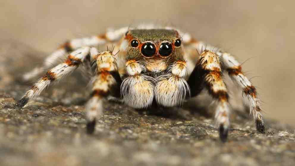 Las arañas y volar, un dúo de lo más curioso.