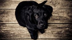 Educar a un perro para ir a su sitio es sencillo si sigues algunas pautas