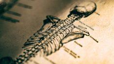 Pasos para dibujar un esqueleto