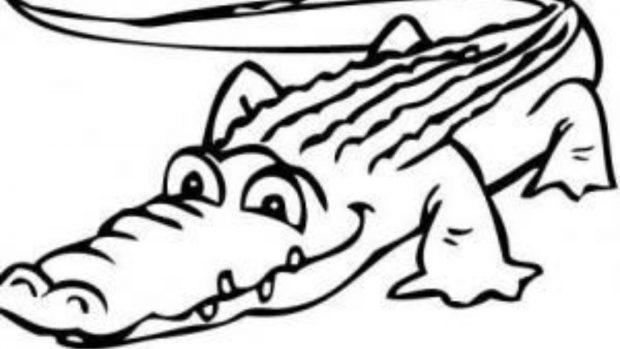Cómo dibujar un cocodrilo