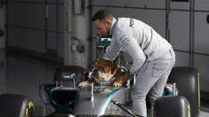 El perro de Lewis Hamilton cobra 700 euros por anuncio, según ha confesado el piloto británico.