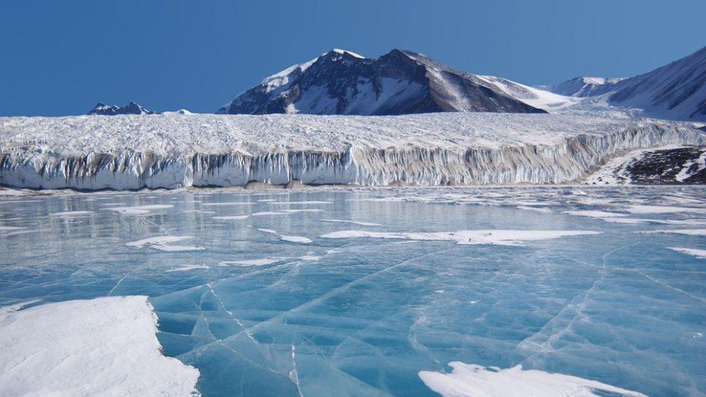 Descubiertas nuevas especies en la Antártida