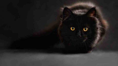 ¿Los gatos antisociales? quizá no tanto…