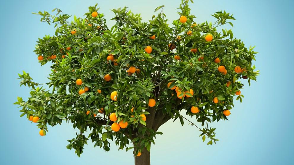 comer naranja en el embarazo