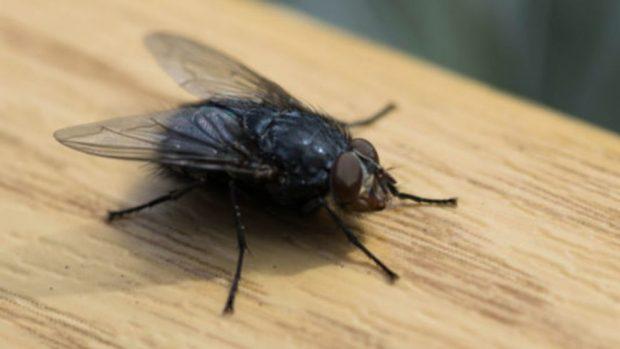 Cómo hacer una trampa para moscas