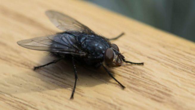 C mo eliminar las moscas - Eliminar moscas en casa ...