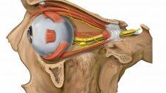 Aprende si se pueden salir los ojos de las órbitas