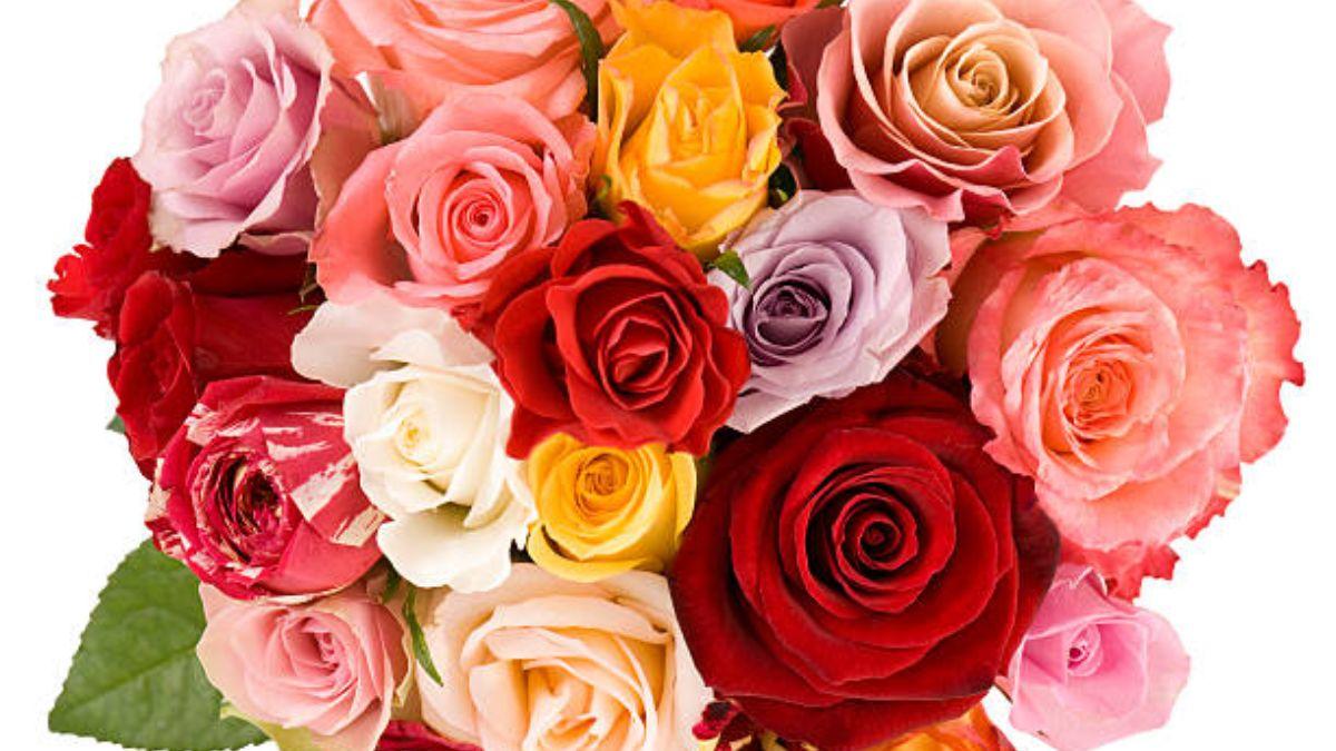 Cada rosa tiene un significado distinto debido a su color