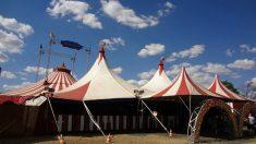 Ventajas de ir al circo con los niños