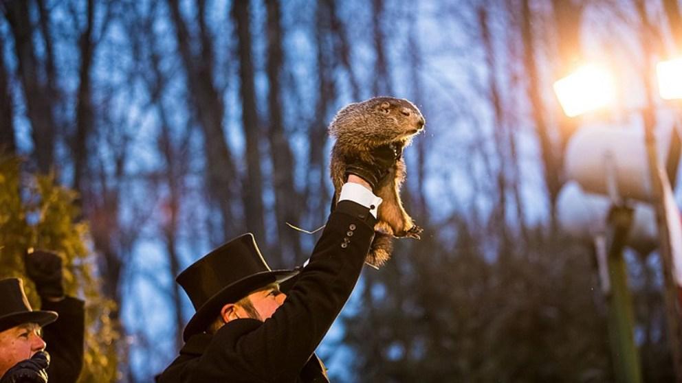 Cómo predice la marmota Phil el tiempo