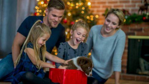 Guía con ideas para regalar un perro